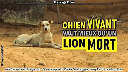 2020 1104 un chien vivant vaut mieux qu un lion mort minia1 450